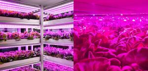 艾迈斯欧司朗新款升级版白光LED照亮新型农业发展